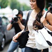 Le borse per chihuahua coniugano eleganza e praticità