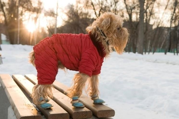 Cappottini per cani accesori cane cappottini per i for Impermeabile per cani fai da te