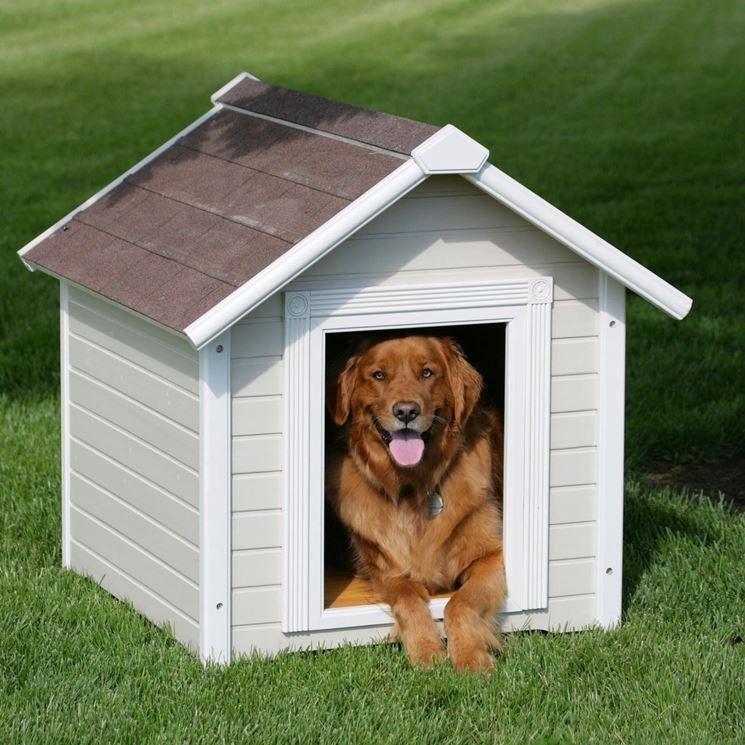 casette per cani