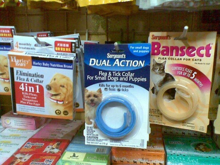 collari cane