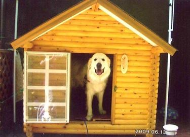 cucce cani