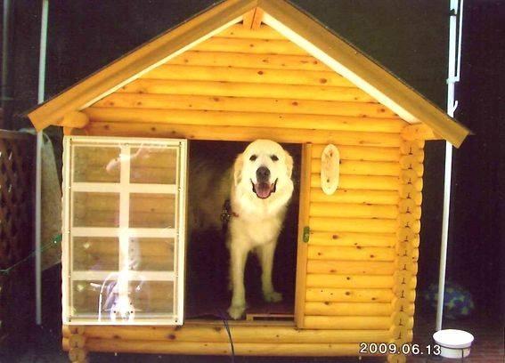 Cucce per cani da interno accesori cane for Cucce per gatti da esterno coibentate