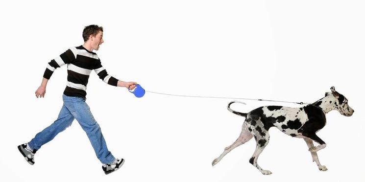 Un cane al guinzaglio del proprio padrone