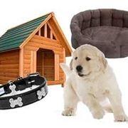 accessori cane
