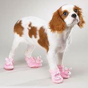 scarpe cani