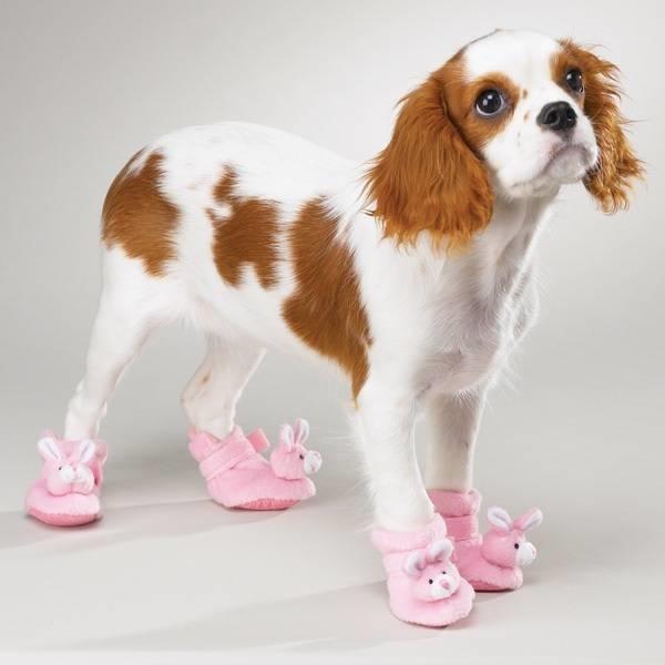 Risultato immagini per scarpe per cani