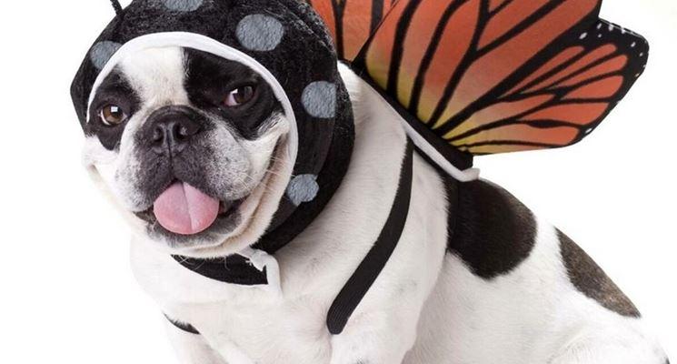 Vestito da carnevale per cane da tigre