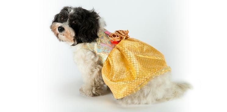 Vestito di carnevale per cani da fatina