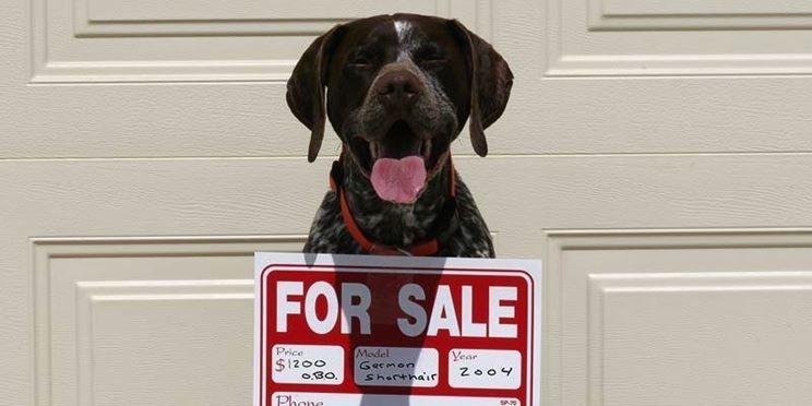 cani in vendita