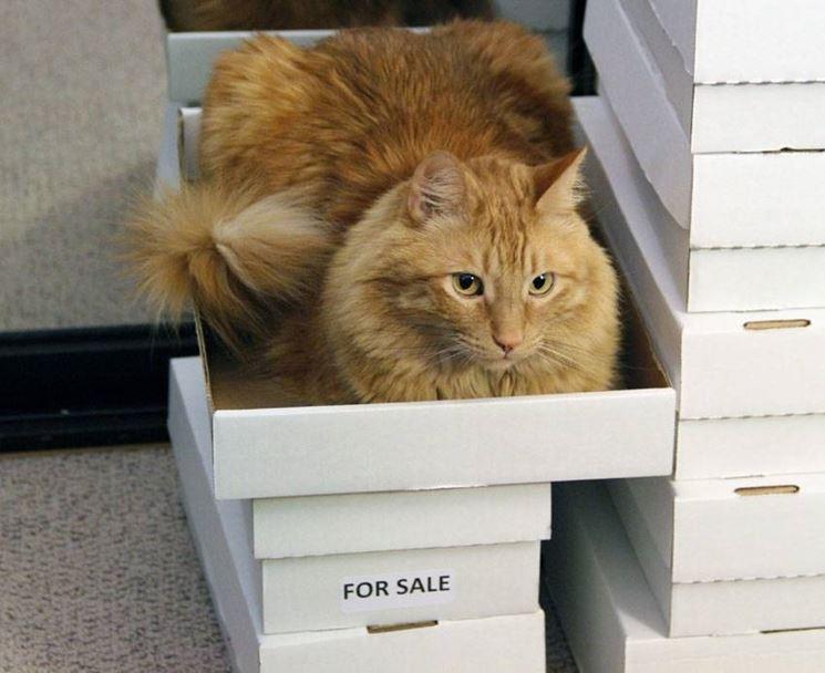 gatti in vendita