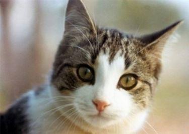 articoli gatti