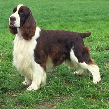 Articoli per animali accessori animali for Articoli per cani