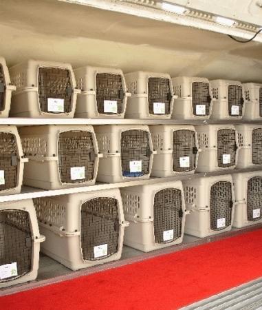 Trasportini per animali accessori animali for Amazon trasportini per cani