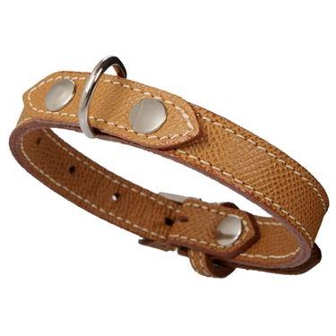 collare cane accessori
