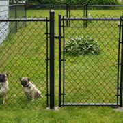 recinto per cani grandi
