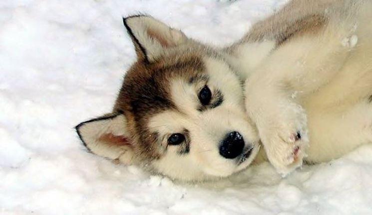cuccioli nella neve