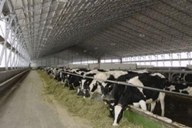 Allevamento bovini da latte