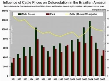Prezzi bovini