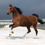 monta di cavalli