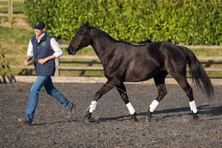 scuola addestramento cavalli
