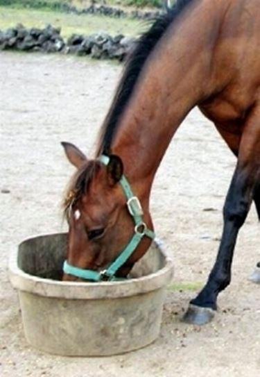 alimentazione cavallo