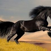 quanto vive un cavallo