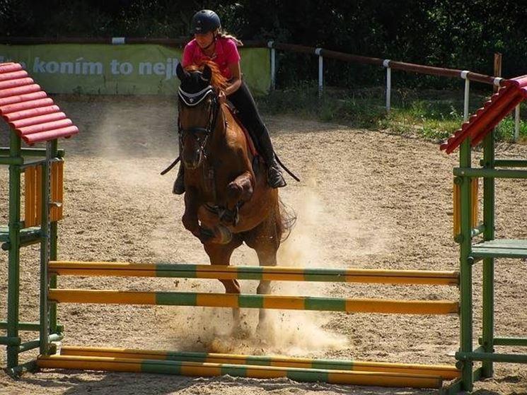 Cavallo spagnolo