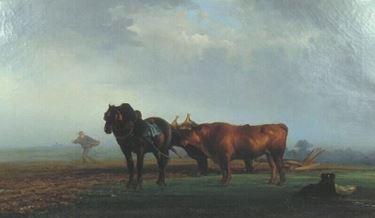 Charolais ritratti da Eugène Chambellan