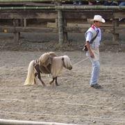 cavallo falabella quanto costa