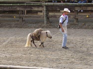 Falabella al ranch