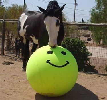 giochi cavalli