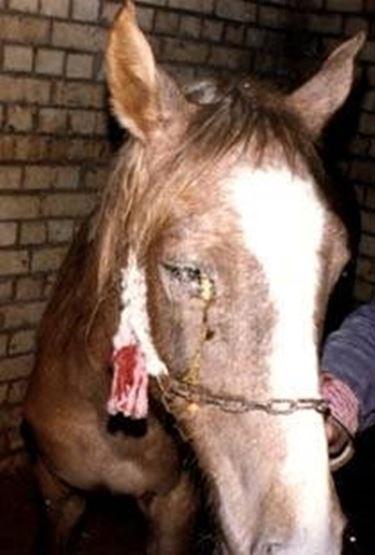 malattie cavallo