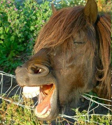 cibo cavalli
