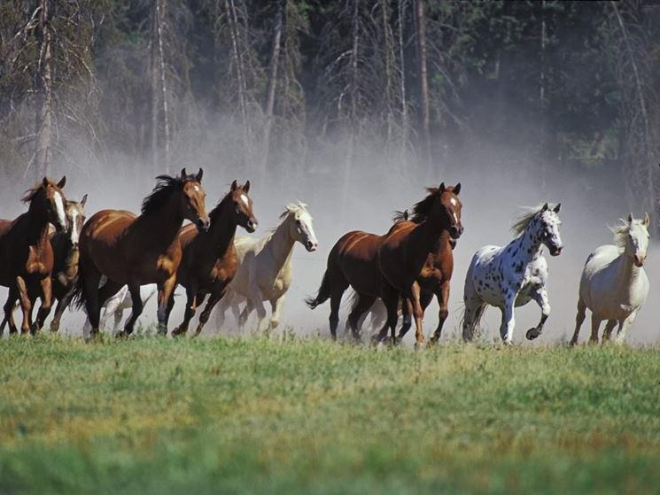 Mustang in libertà