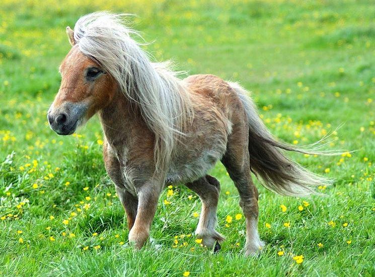 pony-in-vendita_NG1.jpg