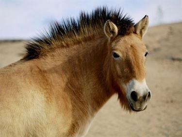 Razze cavalli