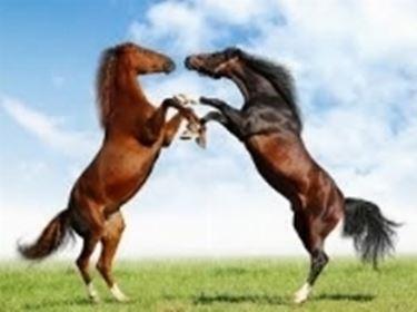 Razze cavalli in combattimento