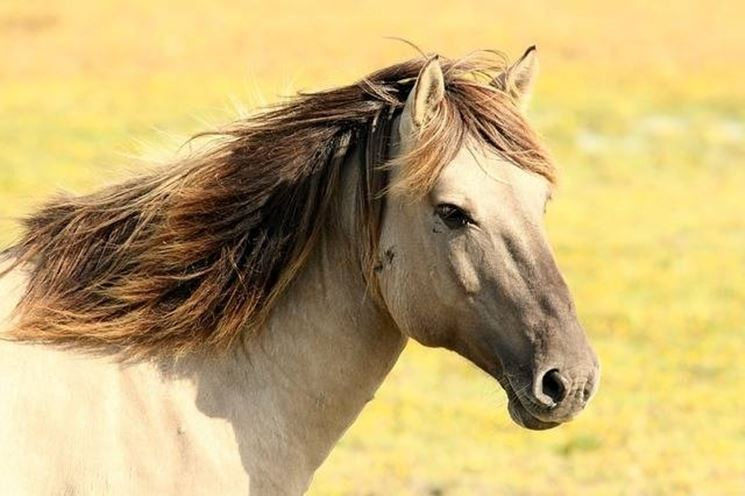 razze di cavalli