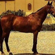 Cavallo Salernitano