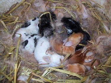 Allevamento conigli da carne