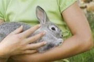 Conigli domestici