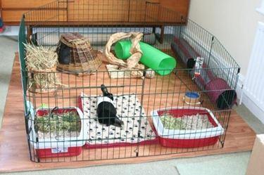 Gabbia per conigli allestita