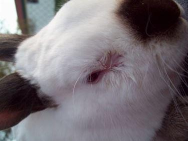 Malattie conigli