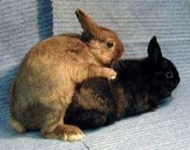 Sognare conigli