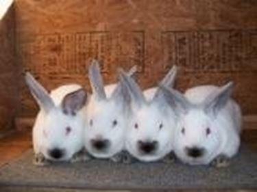 Vendita conigli