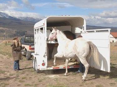 articoli cavalli