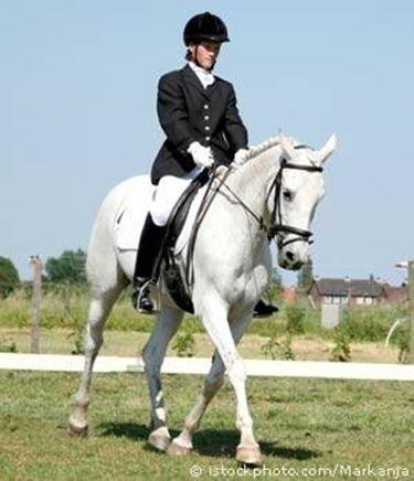 abbigliamento cavallo