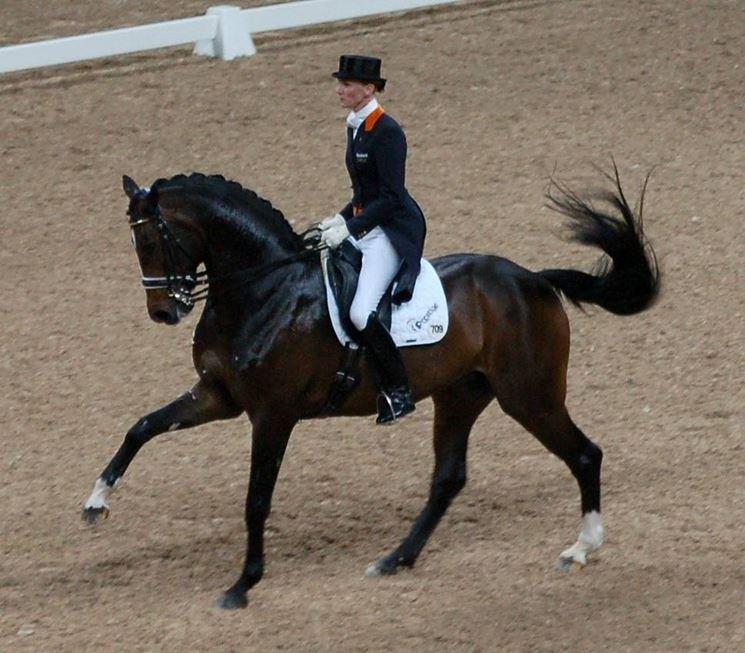 scuola equitazione