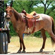 sottosella equitazione