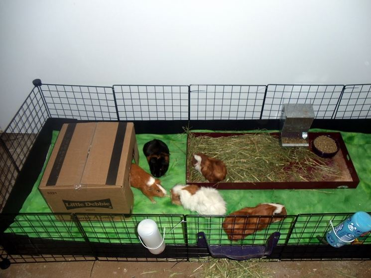 Tipica gabbia per porcellino d'India